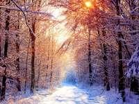 Pădurea iarna