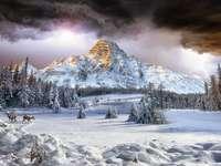 зимата в планината