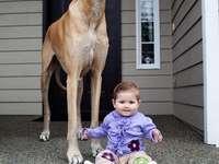 страхотно куче