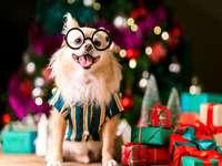 kutyus karácsonykor