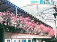 růžové květované rostliny v květináči ve 2. patře budovy
