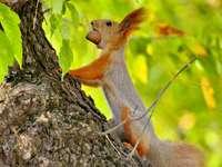 braunes Eichhörnchen auf braunem Ast während des Tages