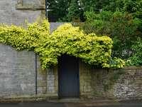 arbre vert à côté du bâtiment en béton gris