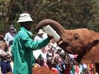 människor i grön jacka som står bredvid brun elefant