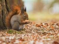 braunes Eichhörnchen auf braunen getrockneten Blättern während des Tages