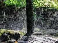 água cai no tronco marrom da árvore