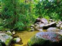 green moss on rocks near river
