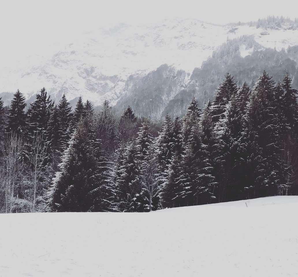 zöld fenyőfák a hóval borított földön napközben - * Vad * Hó * Hegyek * December * Alpok - Francia Alpok. Savoie, Franciaország (20×19)