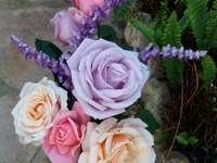 Rosas e rosas