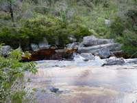 rivière au milieu de l'herbe verte et des arbres