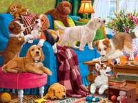 Veel honden