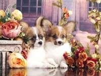Śliczne psy
