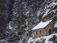 maison brune entourée d'arbres couverts de neige