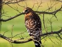Pájaro marrón y blanco en la rama de un árbol durante el día