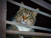 καφέ τιγρέ γάτα σε λευκό μεταλλικό φράχτη