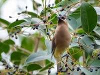 barna madár a fa ága napközben