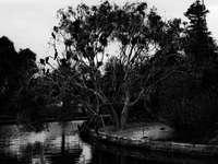 szürkeárnyalatos fotó a víztest közelében lévő fákról