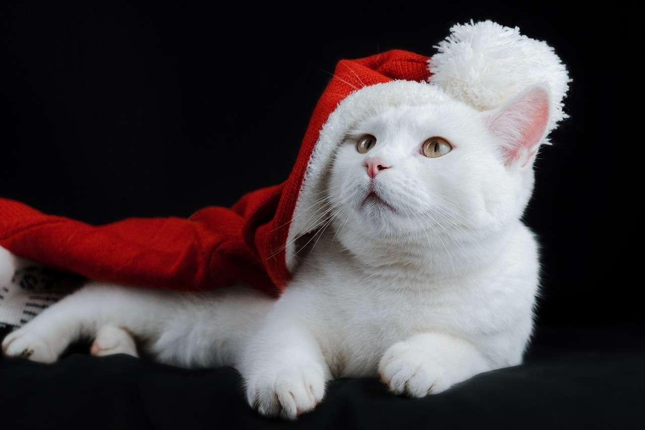Gatto di Natale - gatto bianco di natale con cappello (19×13)