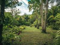 campo de hierba verde con palmeras verdes