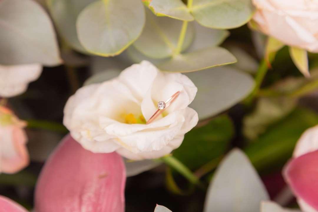 flor branca com folhas verdes - Uma aliança de ouro com um diamante encontra-se lindamente em uma rosa branca em um buquê. Ramalhete. Casamento. Uma oferta de casamento. Casamento. Vista de cima. Lugar para inscrição (4×3)