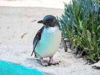witte en zwarte pinguïn op wit zand overdag