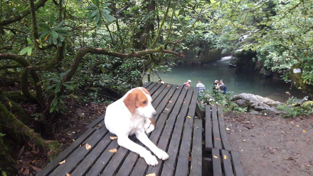 cane su una panchina - grosso cane guardando la panchina (8×5)