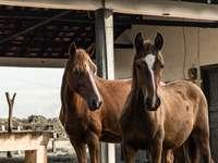 cal maro și alb stând pe gard de lemn maro