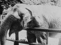 Kinga (Elefant)