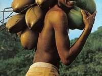Seychelles .....