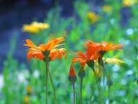 oranje bloem in tilt-shift lens
