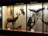 Royal Museum of Central Africa