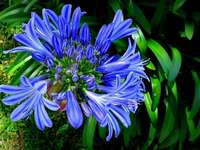 blaue exotische Blume