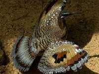 Zonnebloem (vogel)