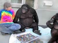 Бонобо .......