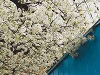 бяло и кафяво дърво до синя дървена стена