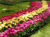 Tulpenfest