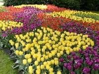 Festival da tulipa