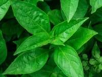 grüne Blattpflanze während des Tages