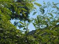 feuilles vertes sous un ciel bleu pendant la journée