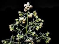 weiße und grüne Blume in der Nahaufnahmefotografie