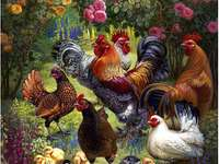 домашни птици