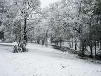 copaci acoperiți de zăpadă în timpul zilei