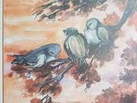 Uccelli assonnati