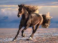ló vágta