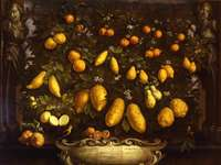 Bartolomeo Bimbi, Melangoli, cédrusok és citromok, 1715