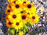Kleine bloemen beschilderd met de zon