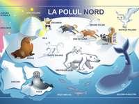 Живите същества на полюсите