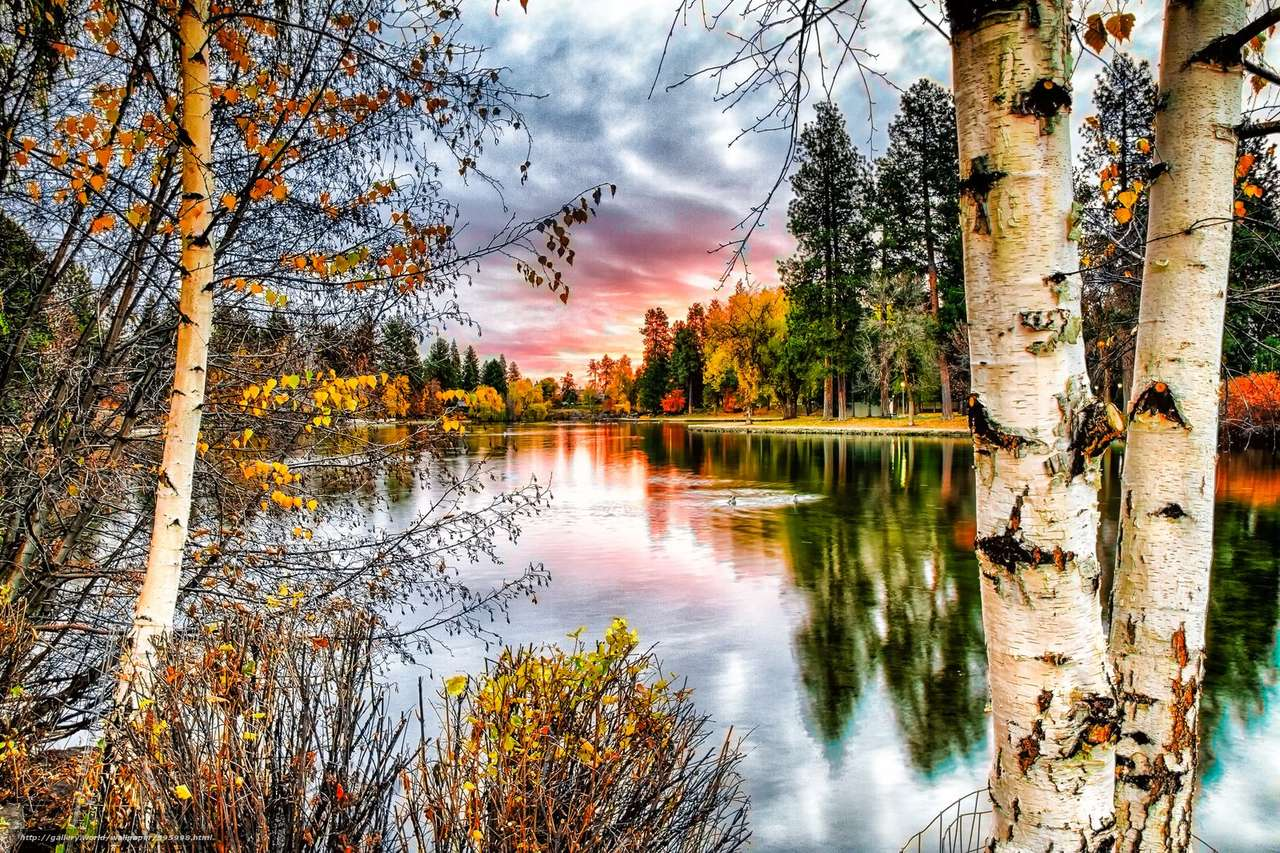 mooi uitzicht - landschap met berkenbomen aan het meer (13×9)
