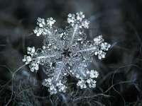 Die Geschichte der Schneeflocke