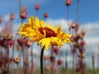 gelbe Blume in Tilt-Shift-Linse